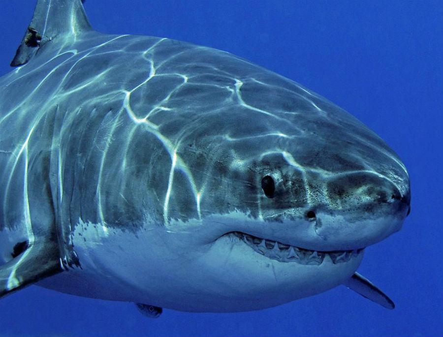 Какая самая большая акула в мире + фото: http://samiye.ru/post/samaya-bolshaya-akula-v-mire.html