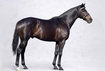 самая дорогая в мире лошадь