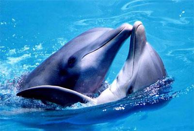 Дельфины – обаятельные морские