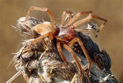Фото самый страшный паук в мире
