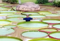 Большое водяное растение