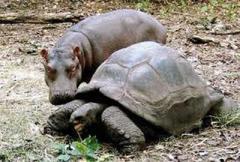 самая большая в мире черепаха