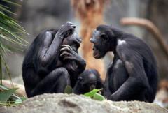 самое умное животное в мире - фото