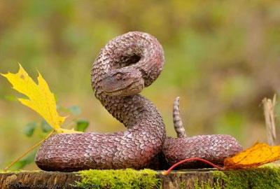 ядовитая змея - фото
